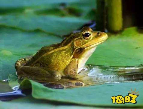 《蚂蚁庄园小课堂》青蛙靠什么呼吸 除了肺之外青蛙还靠哪个器官来呼吸 蚂蚁庄园2020年7月3日答案