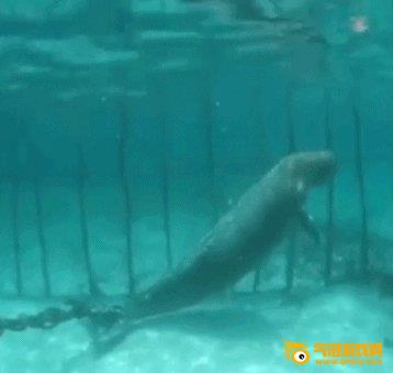《森林驿站》美人鱼是什么动物 儒艮有美人鱼的称号是属于什么种类的动物 森林驿站9月4日答案