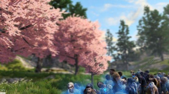 《明日之后》快乐101樱花树在哪里_快乐101樱花树位置