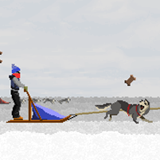 雪橇狗传奇